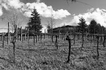 Pimpernel Vineyards, Coldstream, Australia
