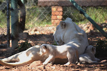 MBIDI Resort & Animal Sanctuary, Middelburg, South Africa