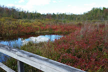 Huckleberry Swamp, North Rose, United States