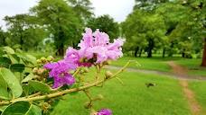 Orchid (kachnar) Park کچنار پارک