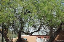 The Jail Tree, Wickenburg, United States
