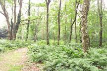 Chorleywood Common, Chorleywood, United Kingdom