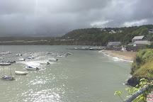 Dolphin Survey Boat Trips, New Quay, United Kingdom
