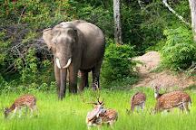 Kaudulla National Park, Habarana, Sri Lanka