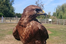 Imperial Bird of Prey Academy, Billericay, United Kingdom