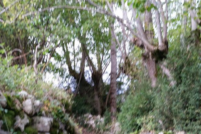 Selva de Conques, Benasque, Spain