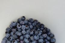 Blueberry Fields, Koersel, Belgium