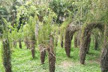 Botanical Orchid Garden, La Garita, Costa Rica
