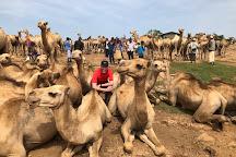 Aman Ethiopia Tours & Travel, Addis Ababa, Ethiopia