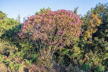 Anamudi Shola National Park, Kannan Devan Hills, India