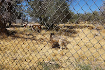 California Wolf Center, Julian, United States