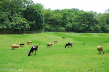 Flying Cow Ranch, Tongxiao, Taiwan