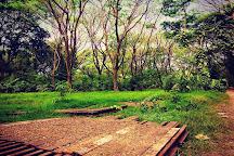 Mangalavanam Bird Sanctuary, Kochi (Cochin), India