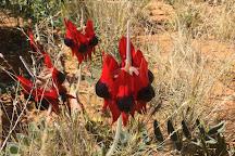 Arid Areas Tours, Coober Pedy, Australia