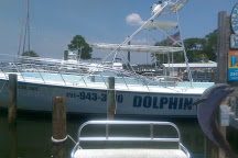 Dolphin Cruise aboard the Cold Mil Fleet, Orange Beach, United States