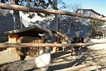 Mundo Alpaca, Arequipa, Peru