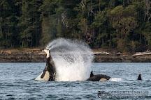 Maya's Legacy Whale Watching, Friday Harbor, United States