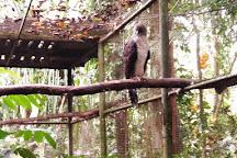 Rainforest Habitat, Lae, Papua New Guinea