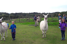 Black Rock Llamas, Porthmadog, United Kingdom