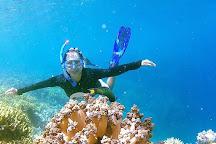Snorkeling Menjangan, Pemuteran, Indonesia