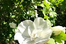 Ruby M. Mize Azalea Garden, Nacogdoches, United States
