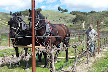 Pipestone Vineyards, Paso Robles, United States