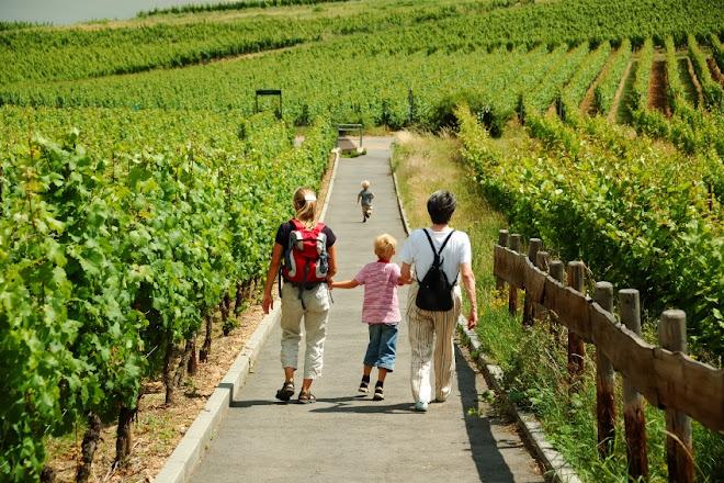Cava Emotions - Wine Tour, Sant Sadurni d'Anoia, Spain