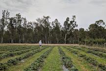 Belstack Strawberry Farm, Kialla, Australia