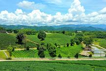 Choui Fong Tea Plantation, Mae Chan, Thailand