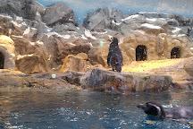 Lotte World Aquarium, Seoul, South Korea
