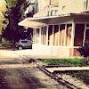 Премьер Стоматология, Стоматологическая Клиника, проспект Юности на фото Ставрополя