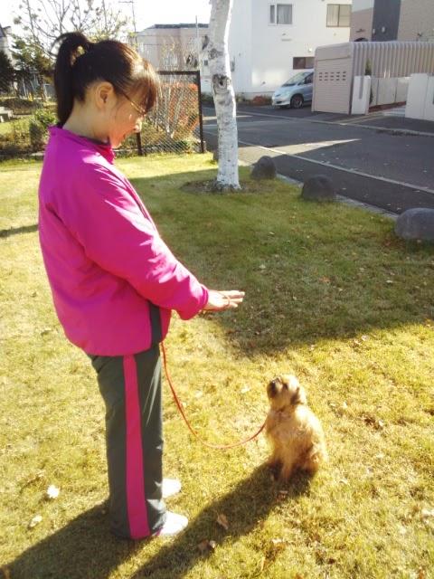 札幌の犬のしつけ ドッグトレーナーおぎの