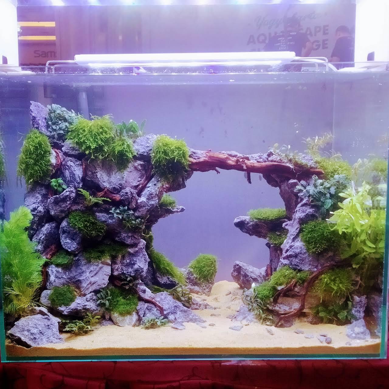 Paguyuban Aquascape Yogyakarta Akuarium