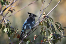 Randall Davey Audubon Center & Sanctuary, Santa Fe, United States