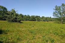 Manuel F. Correllus State Forest, Vineyard Haven, United States