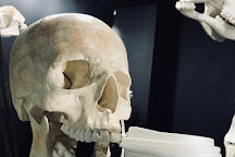 The Bones Museum, Dorchester, United Kingdom