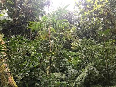 Oficinas Reserva Bosque Nuboso Santa Elena Puntarenas Puntarenas 506 2645 5390