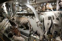 KU Natural History Museum, Lawrence, United States