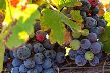 Kiepersol Vineyards, Winery & Distillery, Tyler, United States