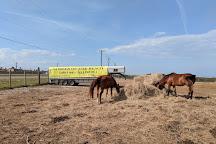 Horses On The Beach: Corpus Christi, Corpus Christi, United States