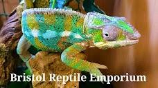 Reptile Zone, Crocsrus