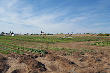 Tolmachoff Farms, Glendale, United States