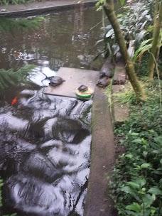 Roath Park Conservatory cardiff