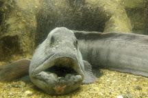 Sognefjord Aquarium, Balestrand, Norway