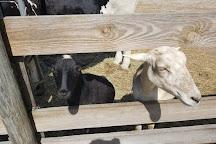 Petting Zoo Ocala, Ocala, United States