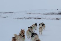 Snow Dogs, Lake Myvatn, Iceland