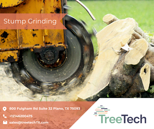 Tree Removal in Texas