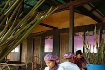 Lotus Farm, Siem Reap, Cambodia