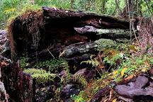 Kipuka Puaulu (Bird Park) Trail, Hawaii Volcanoes National Park, United States