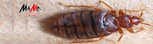M&M Termite & Pest Control Sydney